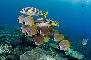 Bali Schooling Fish School of Underwater Photography