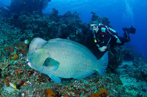 Diving Safari Amed Bali