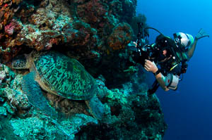 School of Underwater Photography
