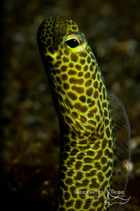 Bali Academy of Underwater Photography Garden Eel