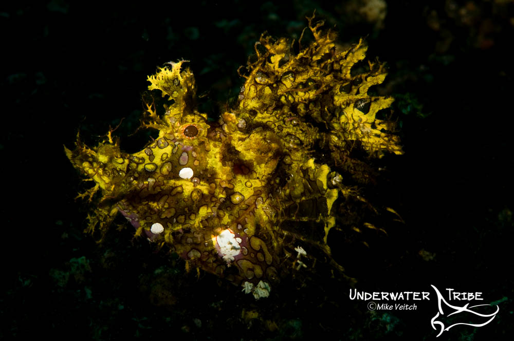Lembeh Strait Rhinopias Photo Workshop