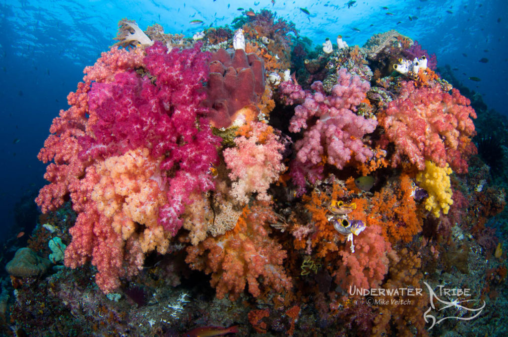 Colourful Corals Raja Ampat
